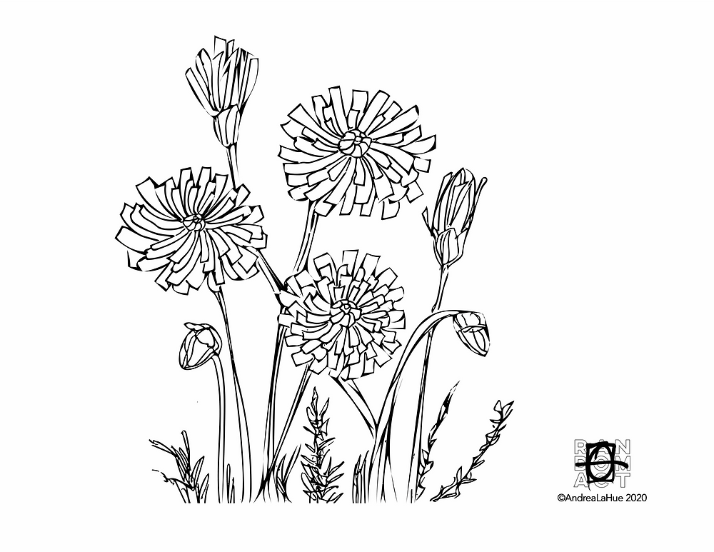 desert dandelion coloring page by Andrea LaHue