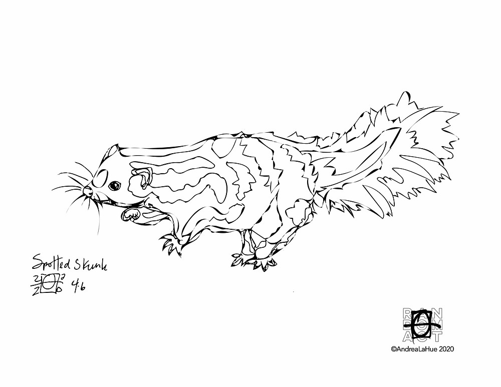 Spotted Skunk coloring page by Andrea LaHue