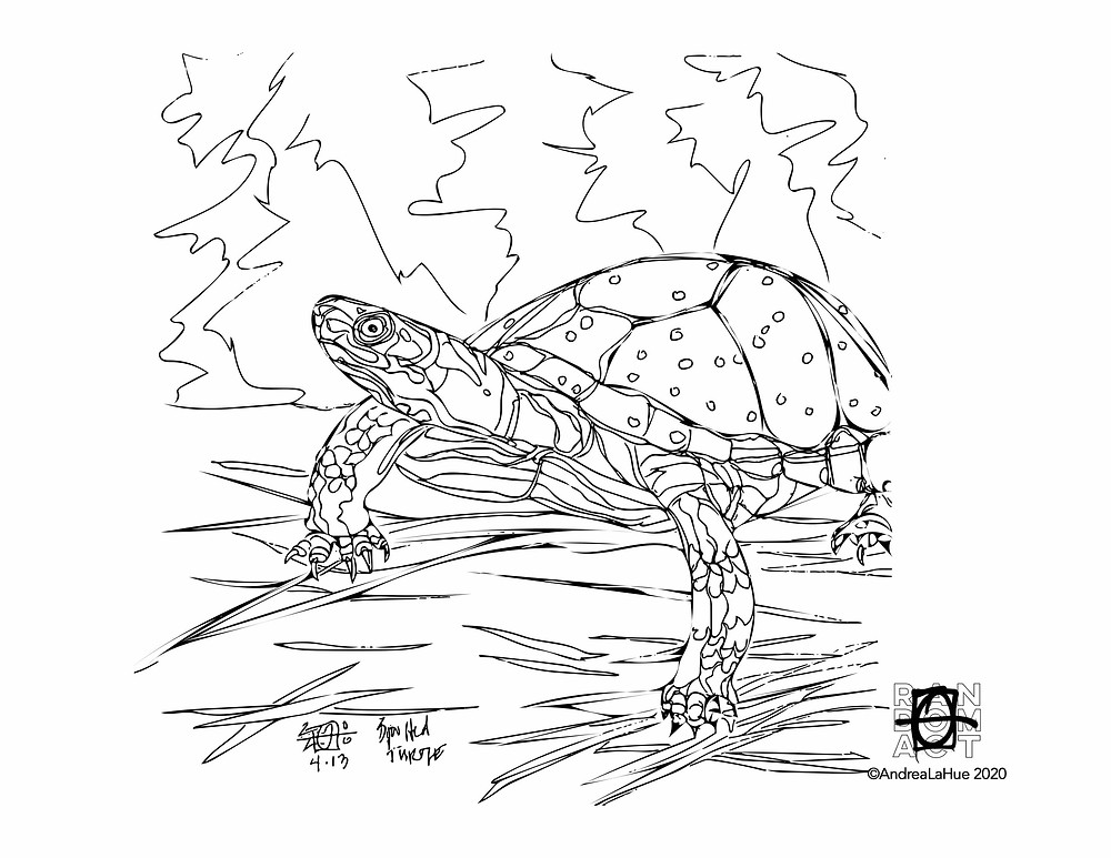 Spotted Turtle Coloring Page by Andrea LaHue