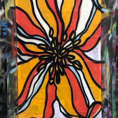 sandiego poppy alahue.jpg