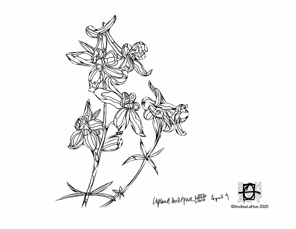 Larkspur coloring page by Andrea LaHue