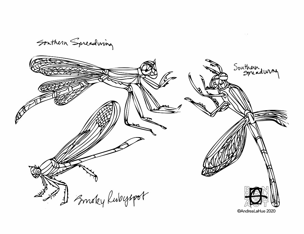 spreadwing coloring pages by Andrea LaHue