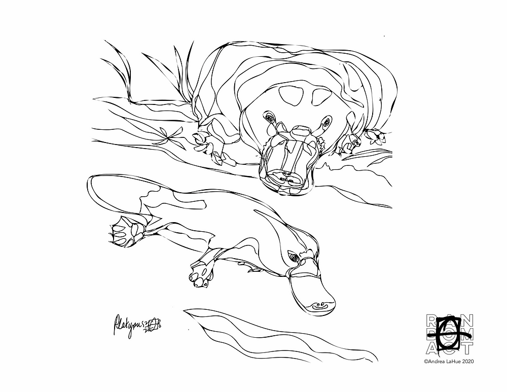 platypus coloring page by Andrea LaHue