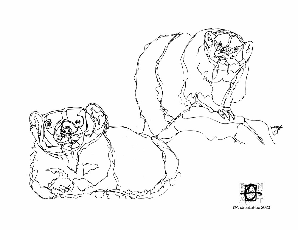Badger coloring pages by Andrea LaHue
