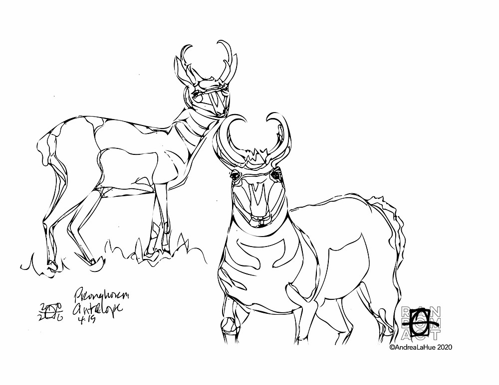 pronghorn coloring page by Andrea LaHue