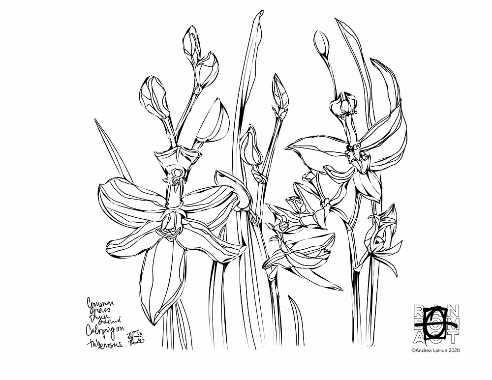 Orchid coloring pages by Andrea LaHue