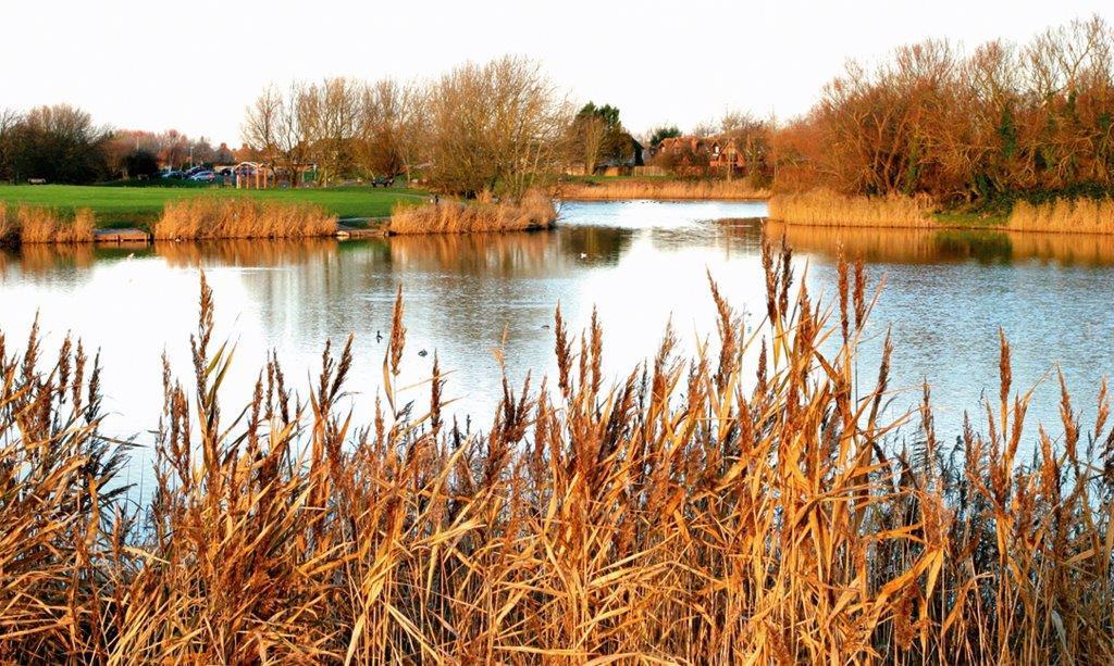 Apex Lake Reed Fringe