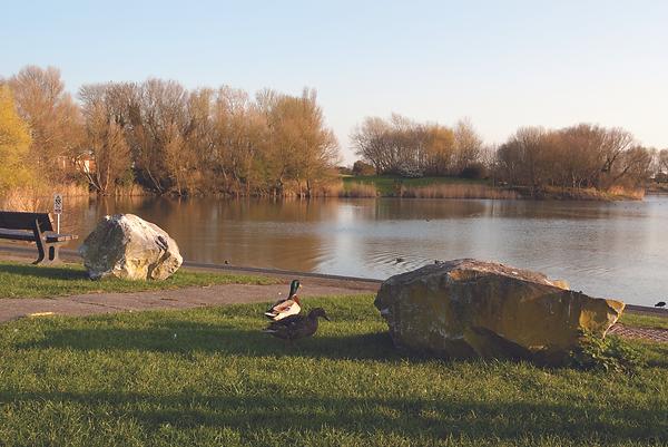 Apex Park-ducks.tif