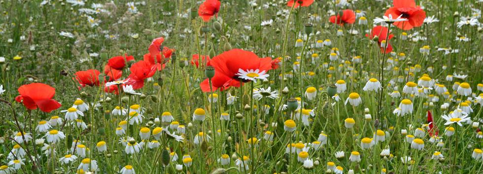 Wildflower Area