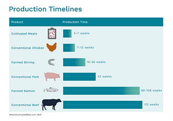 A comparison of production timelines for lab grown meat and conventional meats
