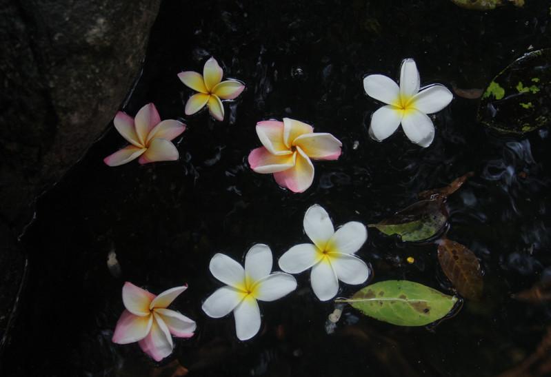 Flores de San Juan Guichicovi