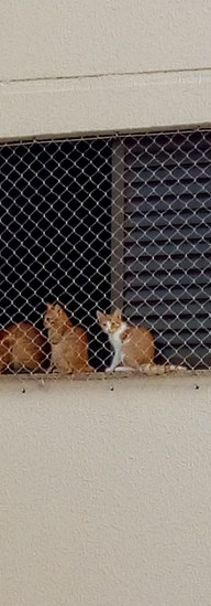 gatos rede uberlandia.jpeg