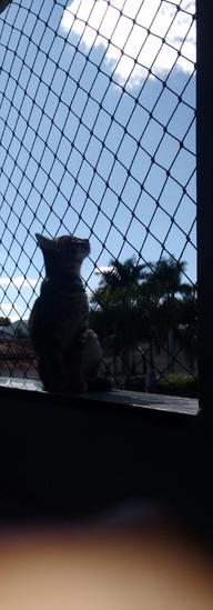tela de proteção para gato uberlandia.jpeg
