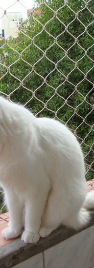 rede de proteção para gatos em uberlandia.jpeg