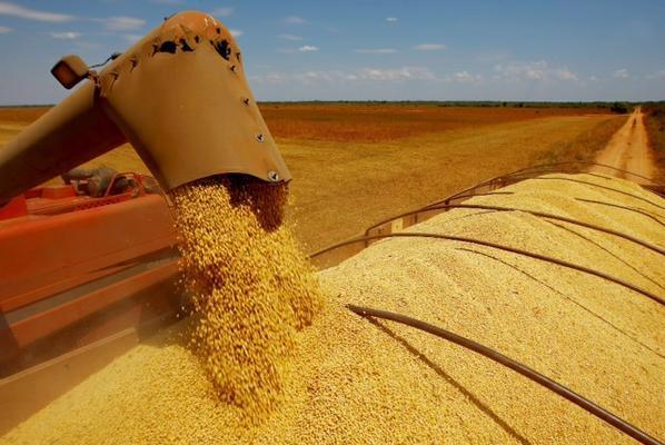 Safra de soja na Bahia supera 110 mil toneladas e ajuda o Brasil