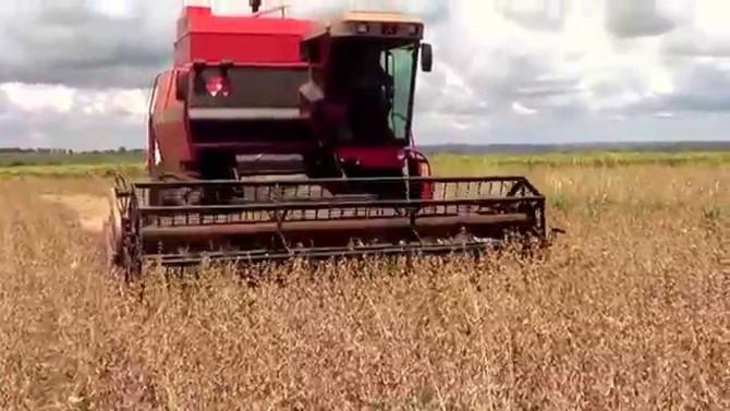 Produtores do cerrado piauiense esperam safra recorde de grãos