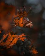 Mottled Foliage