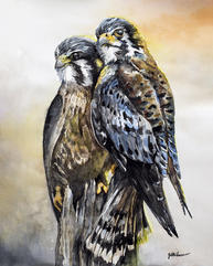 Kestrel Couple