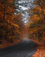 Autumn Cruise