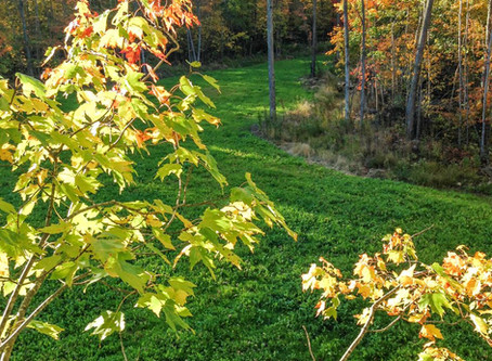 10 Tips to a Better Food Plot