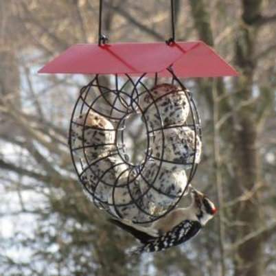 SEED & SUET BALL FEEDER RED ROOF