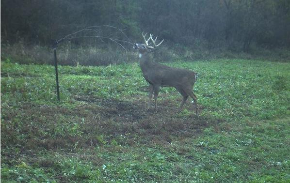 deer%203_edited.jpg