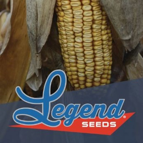 Legend LNG 5795 Conventional Next Gen. Leafy Floury Silage Corn