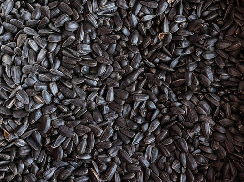 Sunflower Seed 40 # Locally Grown