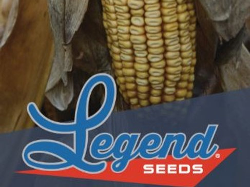 Legend 5895 Conventional 95 Day Corn