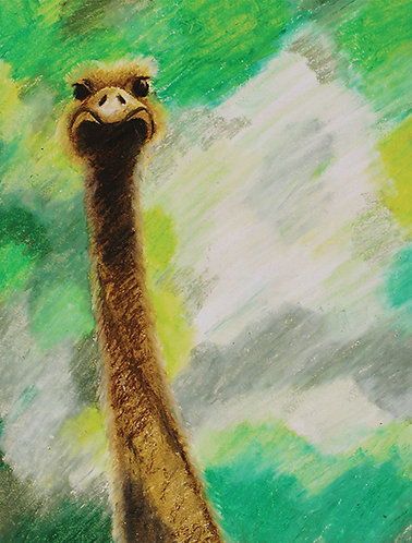 Greeting Card - Ostrich