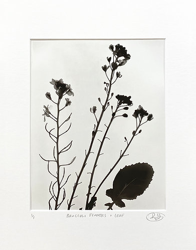 Broccoli Flowers + Leaf (light) - Photogram