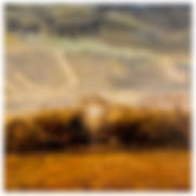 Rye Tippett.jpg