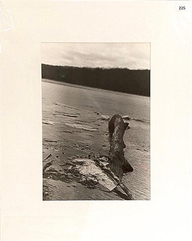 Silver Gelatin Photograph - Driftwood