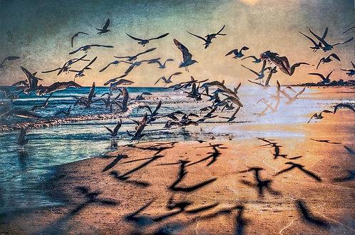 Bird Shadows