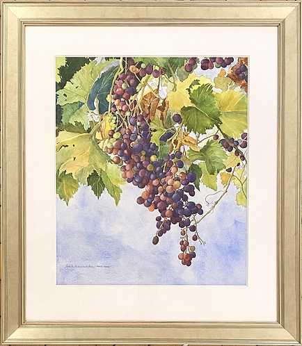 Late Season Grapes