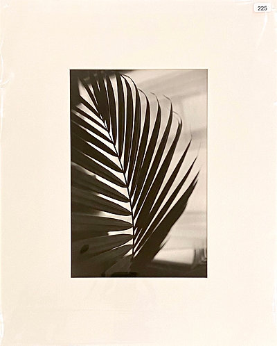 Silver Gelatin Photograph - Leaves