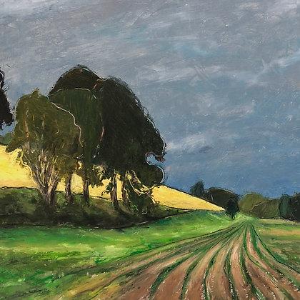 Yellow Field Beyond Fresh Rows