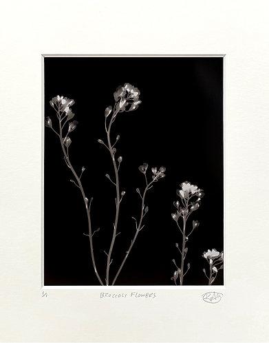 Broccoli Flowers (dark) - Photogram