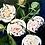 Thumbnail: Flourishing