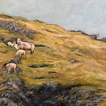 Grazing Icelandic Sheep