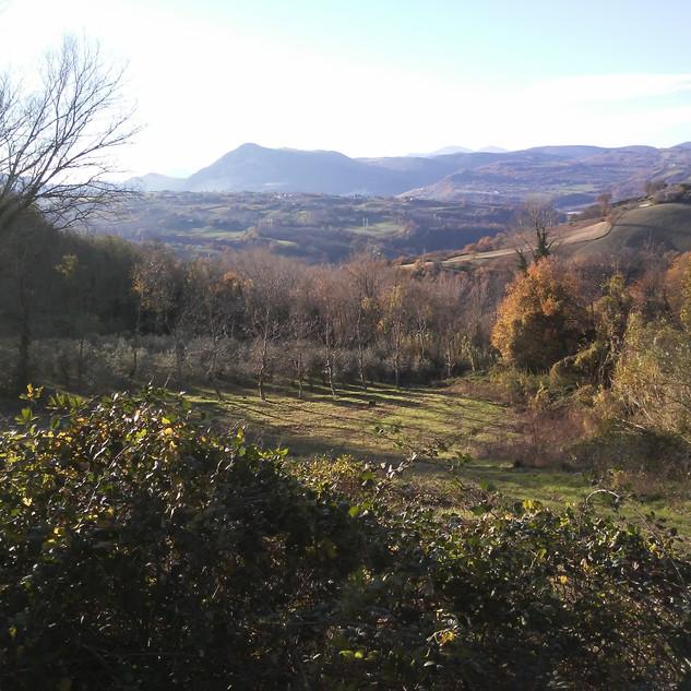 Paesaggio verso il Monte Murano, con alberate coltivate di noci ed ulivi.