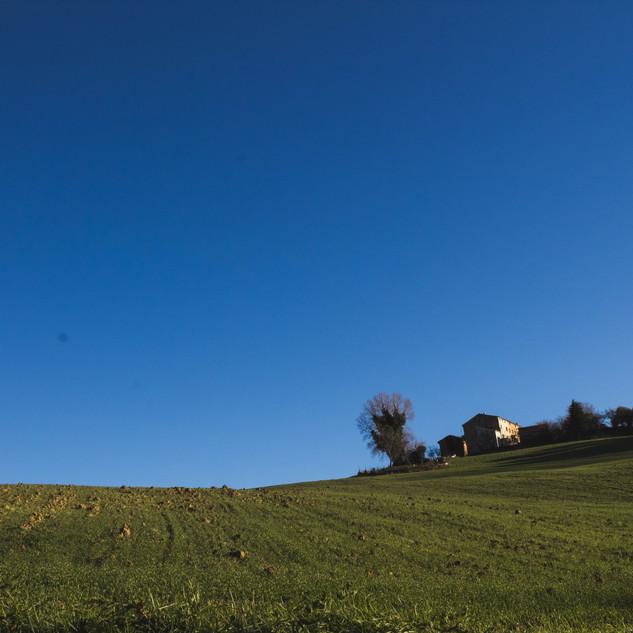 Colture agricole annuali e casolari di campagna.