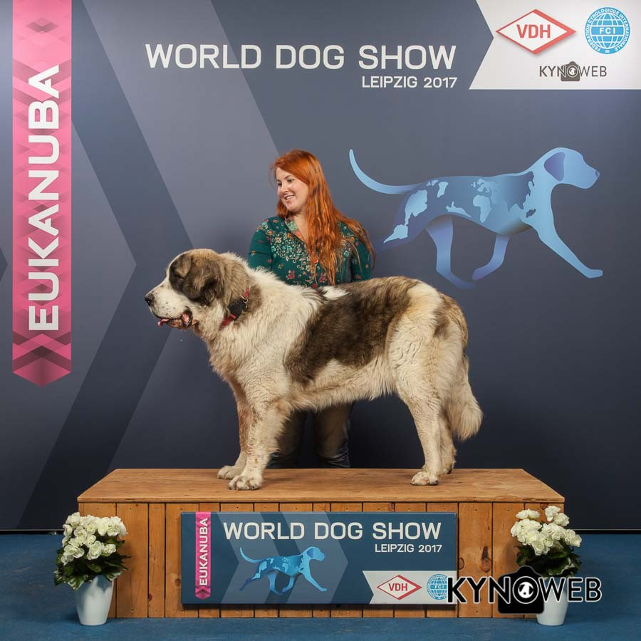 FREE_PICTURE_923_WORLD_DOG-SHOW_Kynoweb_