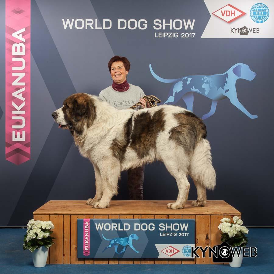 FREE_PICTURE_925_WORLD_DOG-SHOW_Kynoweb_