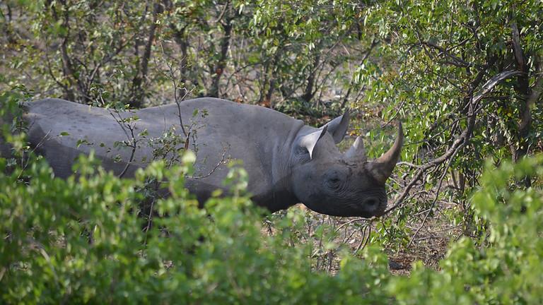 Wildlife Cybercrime Investigations