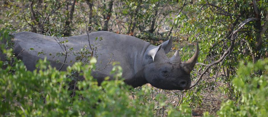 Best Wildlife Parks in India
