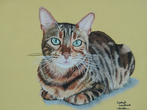 Kitty the Bengal cat
