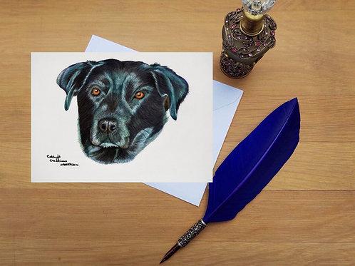 Black Labrador Greetings card.