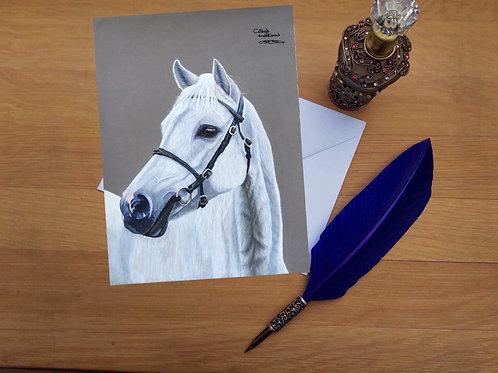 White horse greetings card.