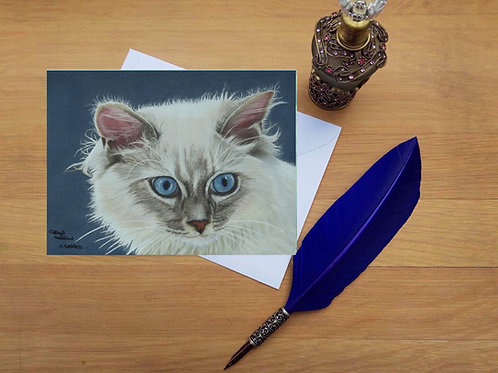 Rag Doll cat greetings card